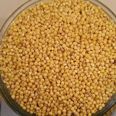 Millet décortiqué bio 100gr Canada